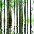 Abstract Forest With Water Stock Photo - 17328910