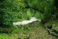 Path In The Woods Royalty Free Stock Image - 1744636