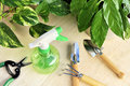 Gardening Tools And Houseplants Royalty Free Stock Image - 17426716