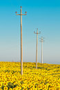 Electricity Poles In Sunflower Field Stock Photos - 17465973