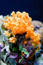 The Underwater Life Stock Photography - 17481682