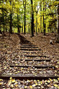 Wooden Stairs Royalty Free Stock Image - 17488166