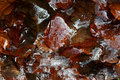 Leaves In Ice Stock Image - 17510011