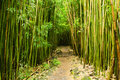 Bamboo Forest Stock Photography - 17591572