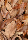 Dead Leaves Texture Stock Image - 1764821