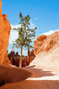 Bryce Canyon Stock Image - 17622991