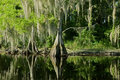 Florida Swamp Landscape With Cypress Royalty Free Stock Photo - 17629585