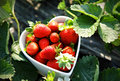 Strawberries In Heart Shape Bowl Stock Images - 17647034