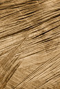 Detail Of Wooden Cut Texture - Rings And Saw Cuts Stock Photo - 17697380