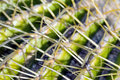 Cactus Macro Royalty Free Stock Images - 1778709
