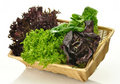 Salad Leaves Royalty Free Stock Photography - 17719997