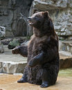 Grizzly Bear Stock Images - 17758374