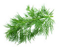 Fennel Royalty Free Stock Image - 17759736
