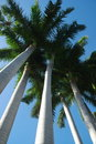 Palm Trees Royalty Free Stock Image - 17796196