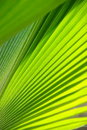 Green Leaf Stock Photos - 17829553