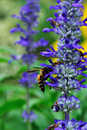 Flower And Bee Stock Photography - 17867522