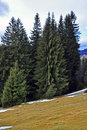 Alpine Landscape With Snowy Pine Forest Royalty Free Stock Image - 17878176