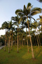 Coconut Trees Royalty Free Stock Photography - 17882967