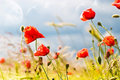 Flowers Royalty Free Stock Image - 17895786