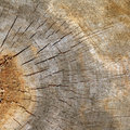 Texture Section  Of Old Tree Stock Photos - 1798093