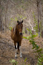 Horse 1 Stock Photos - 1798103