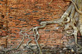 Orange Brick Wall With Ancient Root Tree Royalty Free Stock Photos - 17962218
