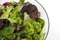 Salad Greens Royalty Free Stock Photo - 17962295