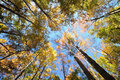 Sky In Forests Stock Photos - 17985973