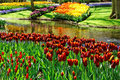 Colorful Tulips. Royalty Free Stock Image - 17986006