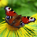 Butterfly Stock Images - 187364