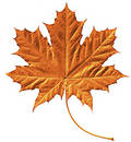 Golden Maple Leaf Royalty Free Stock Images - 189739