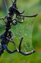 Spiders Web Stock Photo - 1803270