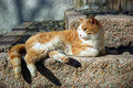 Relaxing Cat Royalty Free Stock Photography - 1808557
