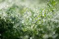 Grass In A Dewdrops Stock Photography - 18001852