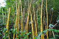 Yellow Bamboo Plant Stock Photography - 18015182