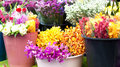 Flower Market Royalty Free Stock Images - 18016709