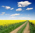 Rape Field Royalty Free Stock Photo - 18104305