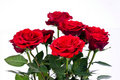 Red Roses Royalty Free Stock Photo - 18158705
