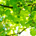 Green Leaves Background Stock Photos - 18177443