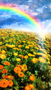 Flower Meadow And Rainbow Royalty Free Stock Images - 18178059