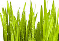 Green Grass With Water Drops Stock Photography - 18215502