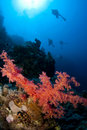 Scuba Divers And Coral Stock Image - 18240651