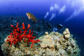 Scuba Divers On Coral Reef Stock Image - 18248001