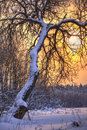 Winter Landscape Stock Photography - 18255182