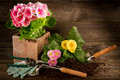 Primrose And Garden Utensil Stock Image - 18266511