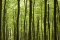 Forest In Springtime. Stock Photo - 18266730