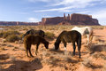 Horses In Circle In  Monument Valley Royalty Free Stock Photo - 1831935