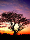 Sunset   And  Tree  01 Royalty Free Stock Photos - 1832358