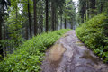 Forest Path After Rain Stock Images - 18300674