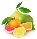 Citrus Fruits Royalty Free Stock Photography - 18305277